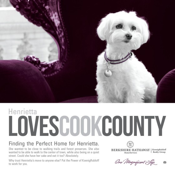 Henrietta Loves Cook County